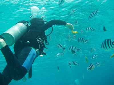 Day2-1 「ガヒマエ」で魚に囲まれての体験ダイビング