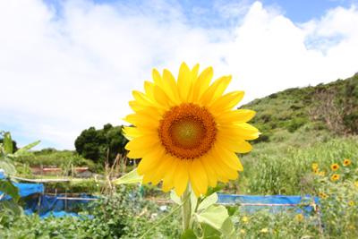 Day4-3 のんびりとした慶留間島