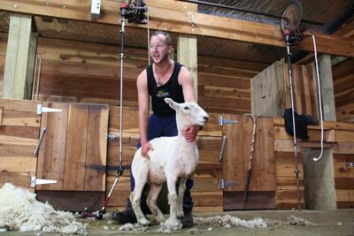 Day3-3 羊な国ニュージーランド