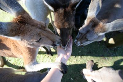 Day5-2 オーストラリアならではの動物たち